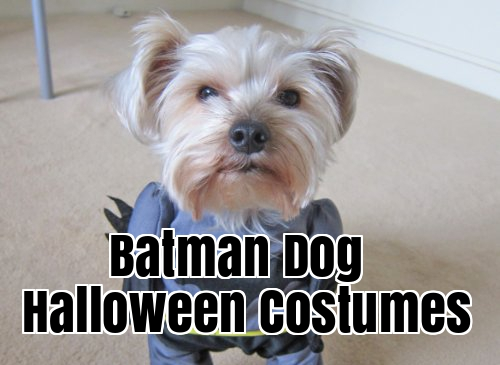 : batman costumes for dogs  - Germanpascual.Com