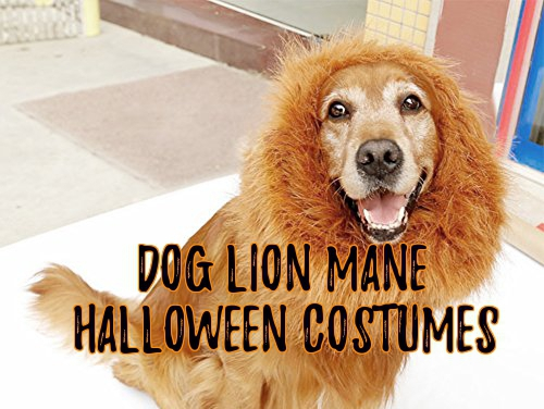 Dog Lion Mane Halloween Costumes